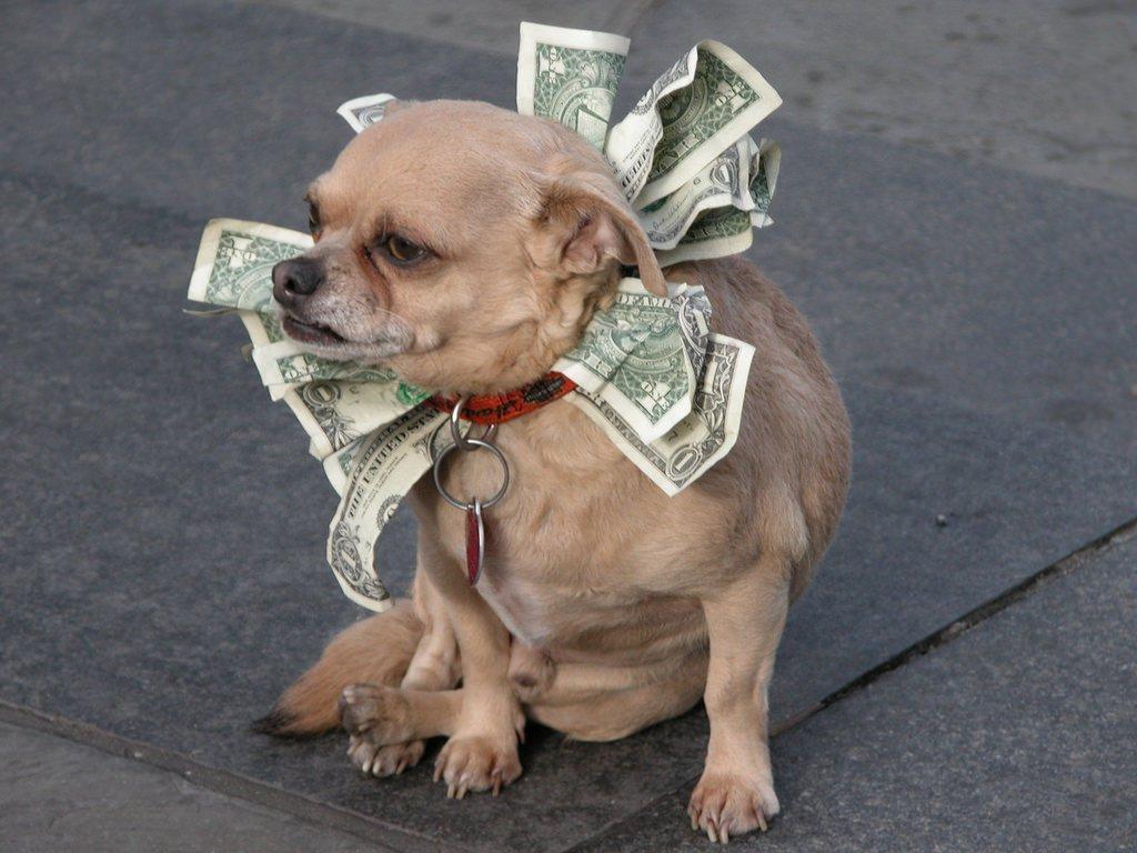 blog-dog